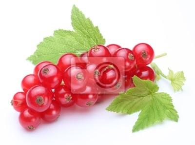 Bouquet de groseilles rouges sur un fond blanc