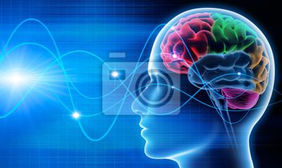Papiers peints Brain - 1 oscillations
