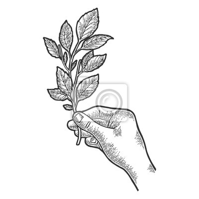 Branch of tea plant in hand sketch engraving vector illustration. T-shirt apparel print design. Scratch board style imitation. Black and white hand drawn image.