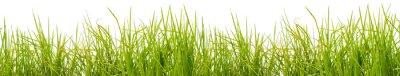 Papiers peints Brins d'herbe, fond blanc