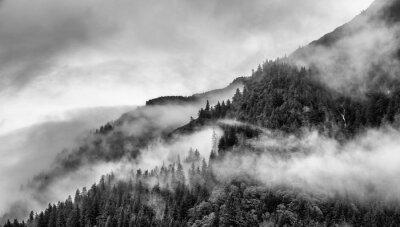 Papiers peints brouillard sur le sommet de la montagne avec le pin