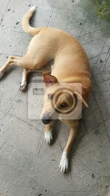 Brown chien en quête de nourriture