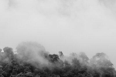 Papiers peints Brume surgissant de la jungle après une forte pluie (noir et blanc)