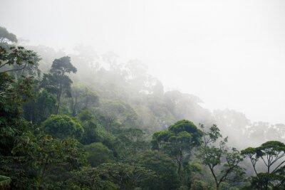 Brumeux Jungle Foret Papier Peint Papiers Peints Tourisme Visite