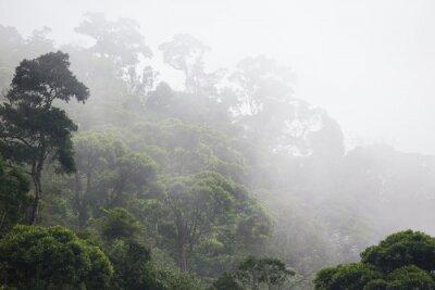 Papiers peints Brumeux, jungle, forêt