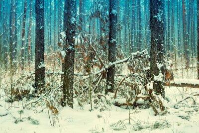 Papiers peints Brumeux, pin, forêt, couvert, premier, neige