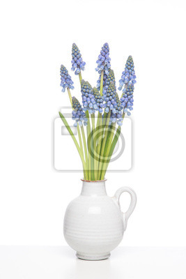 Bunch of Grape hyacints in a white vase on a white shelf