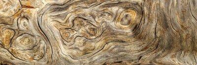 Papiers peints Burlwood Stump
