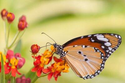 Papiers peints Butterfly on Flower