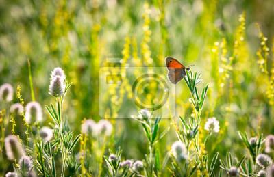 Papiers peints butterfly on wild flower meadow