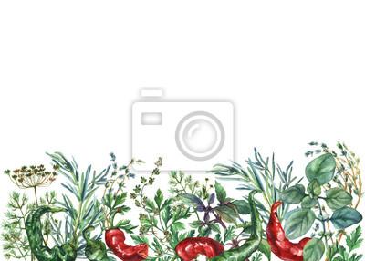 Cadre d'herbes et d'épices d'aquarelle. Objets alimentaires peints à la main: basilic, romarin, persil, origan, thym, aneth, noeud-herbe, poivre vert et rouge sur fond blanc.