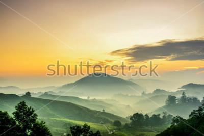 Papiers peints Cameron Highlands ,Malaysia. Sunrise  at green tea farm mountain. Dramatic moving cloud in nature landscape on sunshine morning.
