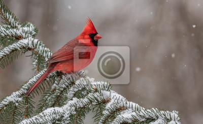 Papiers peints Cardinal dans la neige