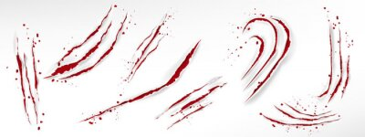 Papiers peints Cat claw scratches with blood drops, red torn slashes from wild animal, tiger, bear or lion paws isolated on white background. Vector realistic sharp talons marks, wounds with bloody splatter