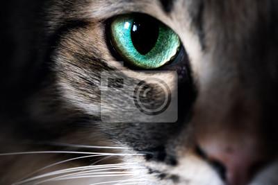 Papiers peints Cat eye macro closeup animal
