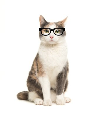 Cat sitting seen from the front facing the camera wearing black glasses isolated on a white background