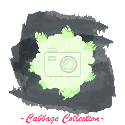 Cauliflower vector isolated cabbage on a grunge background