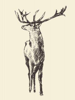 Papiers peints Cerf, gravure, vendange, Illustration, vecteur