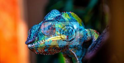Papiers peints chameleon with amazing colors