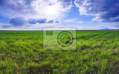 champ d'herbe et le ciel parfait