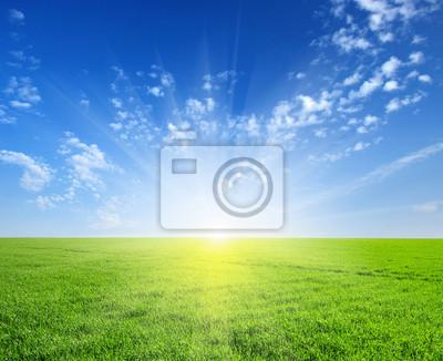 Papiers peints champ et le soleil