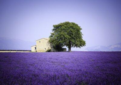 Papiers peints Champ, fleurir, lavande, fleurs, vieux, ferme, Provence, france