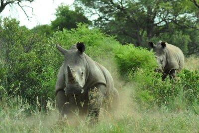 Papiers peints Charge de Rhino