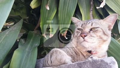 Chat mignon de détente sur le mur