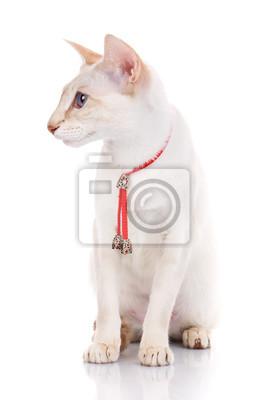Chat, séance, blanc, fond, rouges, collier, isolé