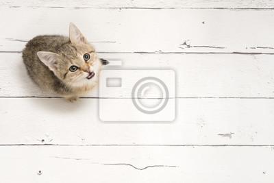 Chat tigré mignon jeune levant