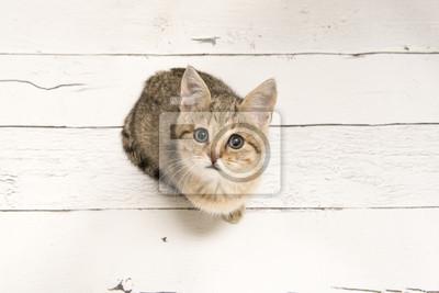 Chat tigré mignon jeune levant vu d'une vue d'angle élevé sur un fond en bois blanc