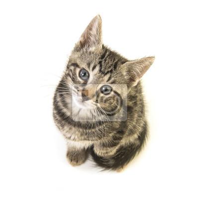 Chat tigré mignon jeune regardant vers le haut vu d'un angle élevé