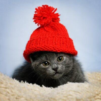 Papiers peints Chaton dans un chapeau rouge