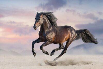 Papiers peints Cheval au galop dans le sable du désert