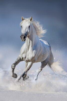 Papiers peints Cheval, neige