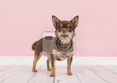 Chien chihuahua brun mignon debout vu de côté dans un cadre de salon rose