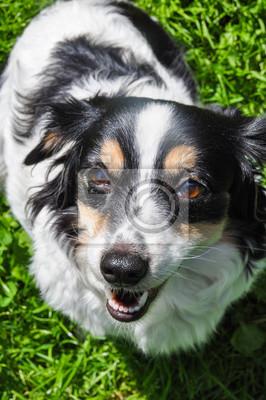 Chien Peint chien demandant de la nourriture. nutrition pour chiens papier peint