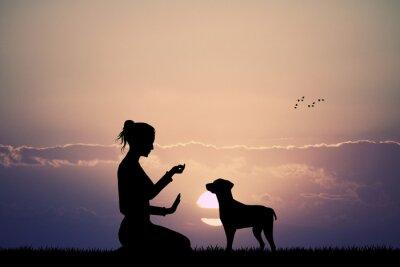 Papiers peints chien dressé au coucher du soleil
