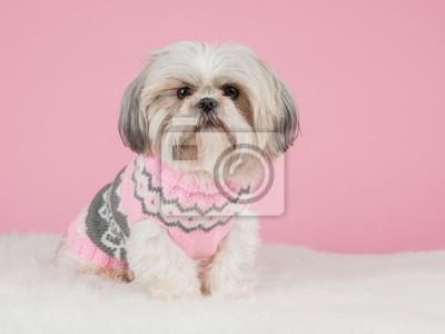 Chien vêtu d'un pull rose tricoté à un fond rose
