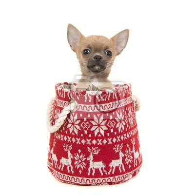 Chiot chihuahua mignon dans un panier de Noël en laine rouge et blanc