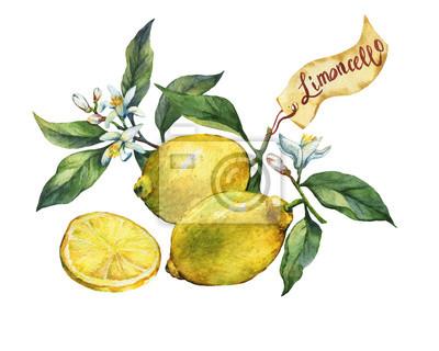 Citron frais citron sur une branche avec des fruits, des feuilles vertes, des bourgeons et des fleurs. Étiquette en style d'esquisse. Peinture aquarelle dessinée à la main sur fond blanc.