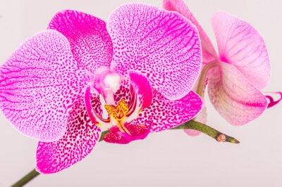 Papiers peints Close-up de la fleur d'orchidée