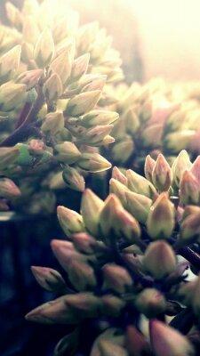 Papiers peints Close-up Of Flowers