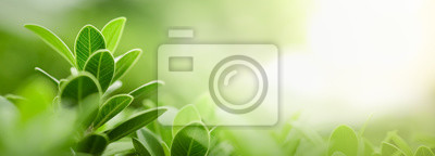 Papiers peints Close up of nature view green leaf on blurred greenery background under sunlight with bokeh and copy space using as background natural plants landscape, ecology wallpaper or cover concept.