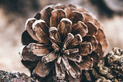 Papiers peints Close-up Of Pine Cone