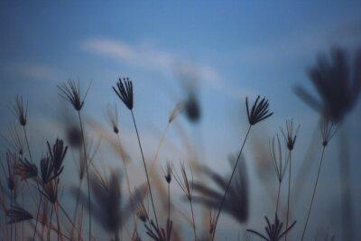 Papiers peints Close-up Of Wheat Plants Against Sky