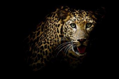 Papiers peints Close up portrait of leopard with intense eyes