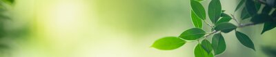Papiers peints Closeup nature view of green leaf on blurred greenery background in garden with copy space for text using as summer background natural green plants landscape, ecology, fresh cover page concept.