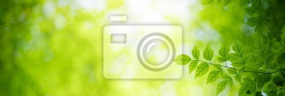 Papiers peints Closeup nature view of green leaf on blurred greenery background under sunlight with bokeh and copy space using as background natural plants landscape, ecology cover page concept.