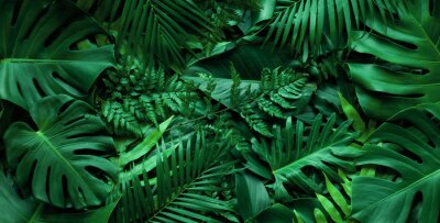 Papiers peints closeup nature view of tropical green monstera leaf and palms background. Flat lay, fresh wallpaper banner concept